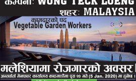 Vacancy for Vegetable Garden Worker in Malaysia