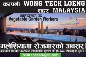 Read more about the article Vacancy for Vegetable Garden Worker in Malaysia