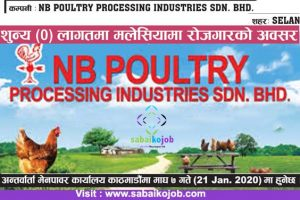 Read more about the article Job in Malaysia | Apply at Zero Cost | Poultry industries