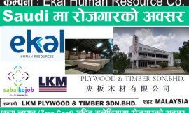 Jobs | Ekal human resource | LKM Plywood & timber