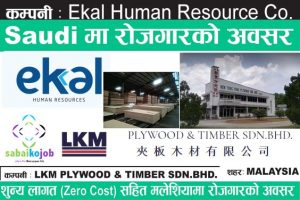 Read more about the article Jobs | Ekal human resource | LKM Plywood & timber