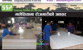 Job in Malaysia at songsang plywood m sdn bhd